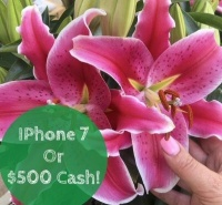 Win an iPhone7 or $500 Cash