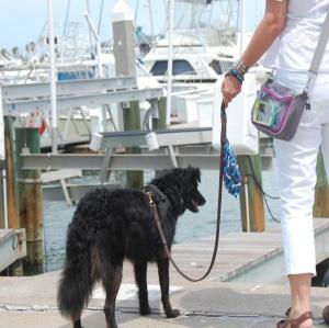 Win a PawZaar Dog Walking Bag