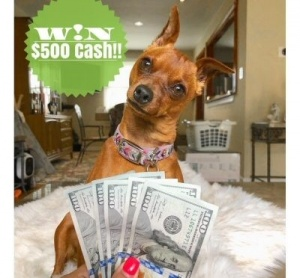 One winner will receive $500 in PayPal cash!!