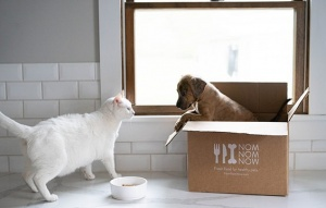 One Year Supply of NomNomNow Dog Food Giveaway